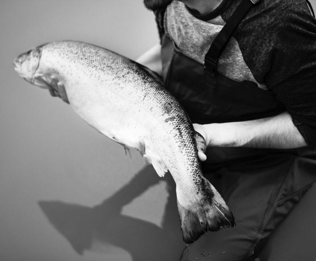 Hvorfor er fisk sundt